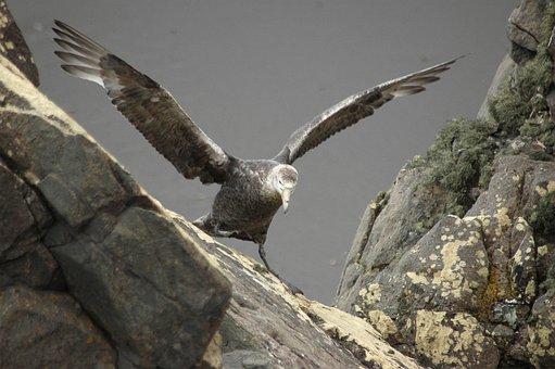 Albatross, Baby, Learning, Nature, Bird, Chick