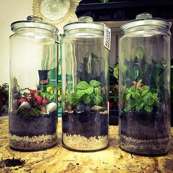 Greenforest, Glass, Plant, Home, Decor, Diy