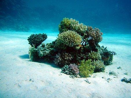 Coral, Underwater Oasis, Ocean Floor, Diving