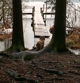 Nature, Trees, Root, Animal, Dog, Waters, Water, Web
