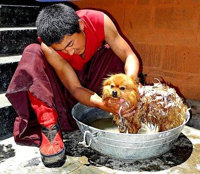 Tibet, Man, Dog, Bowl, Washing, Soap, Soaping, Cute