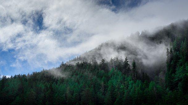 Clouds, Conifers, Fir Trees, Fog, Forest, Haze