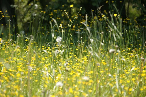 Meadow, Flowers, Spring, Hay Fever, Pollen, Blossom