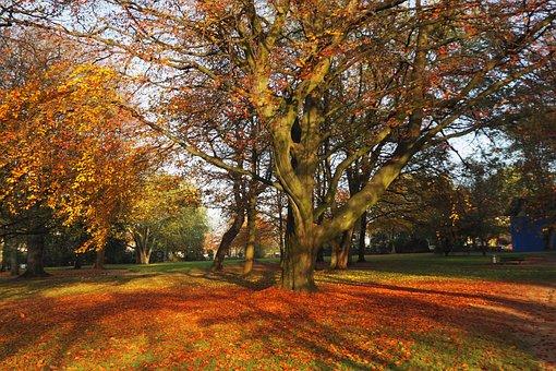 Park, Autumn, Leaves, Castle Park, Husum