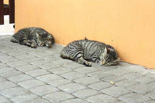 Cats, Kitten, Blanket, Cat, Animal, Fur, Pet, Tomcat