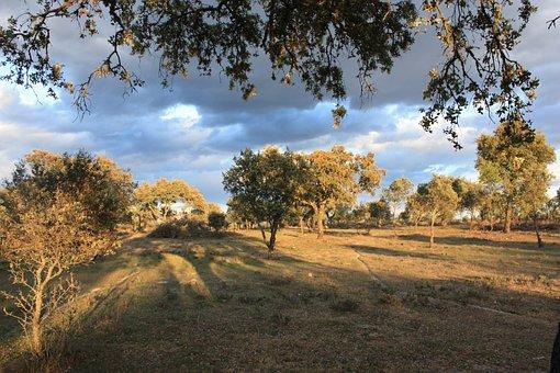 Finca, Extremadura, Spring, Encinar