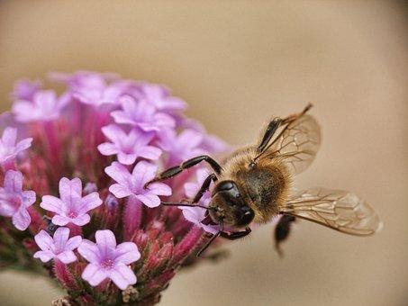 Bee, Honey, Macro, Animal, Beehive, Busy, Wild, Bug
