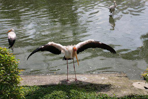 Zoo, Bird, Bird Park, Kuala Lumpur Bird Park, Malaysia