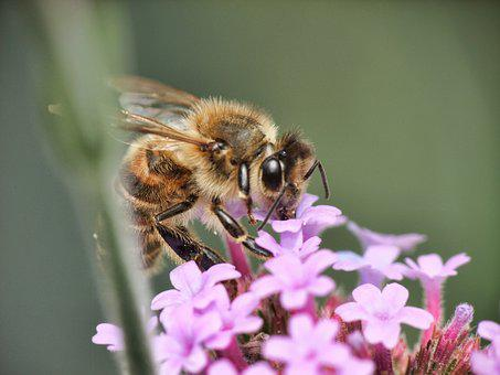 Bee, Honey, Working, Food, Beekeeper, Close, Pollen