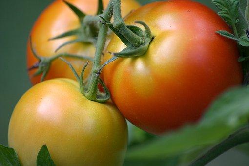 Tomatoes, Tomato, Summer, Vegetable, Vegetarian