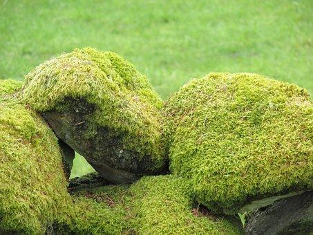 Moss, Rocks, Stone, Natural, Outdoor, Environment