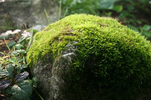 Mossy Rock, Spring, Green, Water, Moss, Wet, Stone