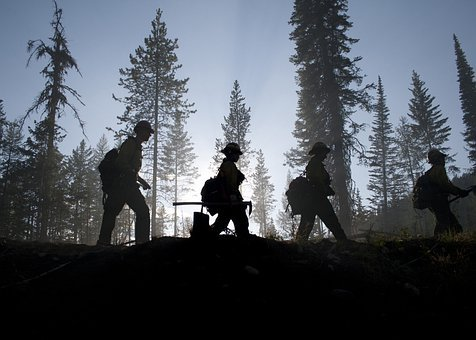 Forest, Trees, Firefighters, Silhouette, Silhouettes