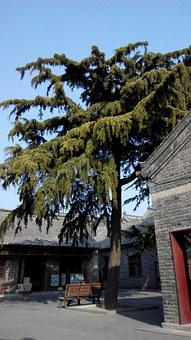 Qufu China Three-hole, Trees, The Scenery