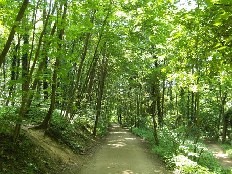 Odenwald, Forest Path, Trail, Summer, Hiking, Away
