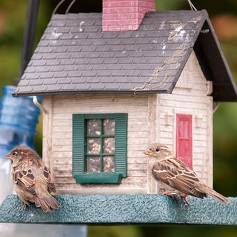 Birds, Birdfeeder, Sparrow, Food, Seeds, Cardinal