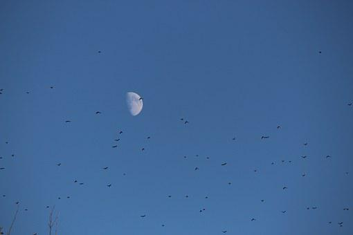 Moon, Birds, Flock, Sky, Day, Afternoon, Waning, Waxing