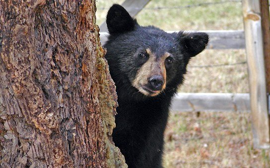 Bear, Cub, Animal, Tree, Young, Garden, Summer