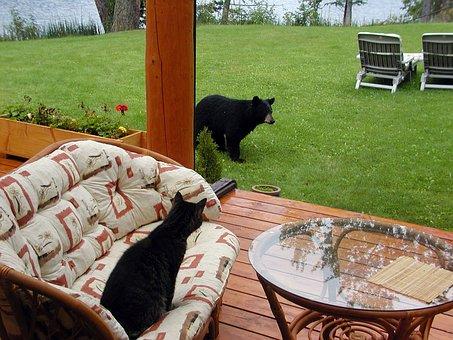 Bear, Cub, Animal, Cat, Terrace, Garden, Scary