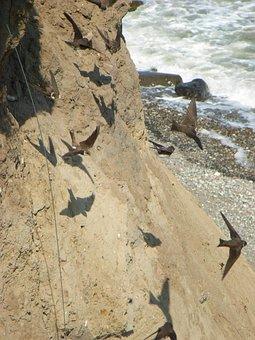 Terns, Bluff, Baltic Sea, Coast, Bird Flight, Cliff