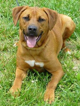 Dog, Hound, Rescue, Animal Shelter, Pet, Canine, Animal