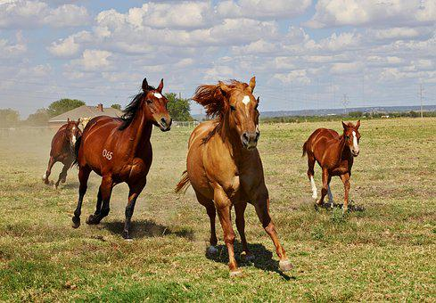 Horses, Foal, Mare, Animal, Pasture, Mare With Foal