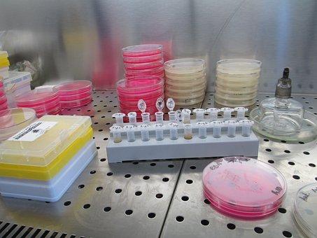 Laboratory, Lab, Science, Research, Biology, Scientific