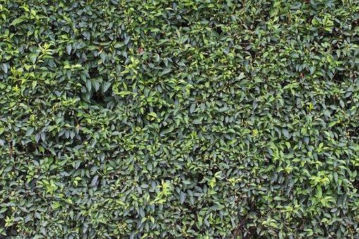 Wall, Green, Leaves, Sheet, Garden