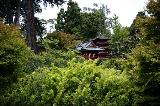 Asian, Nature, Japanese, Forest, Japanese Garden, Woods