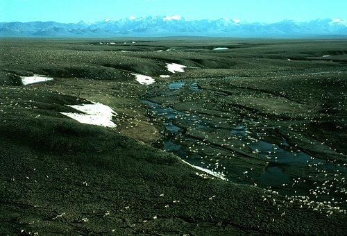 Alaska, Landscape, Caribou, Herd, Animals, Many, Sky