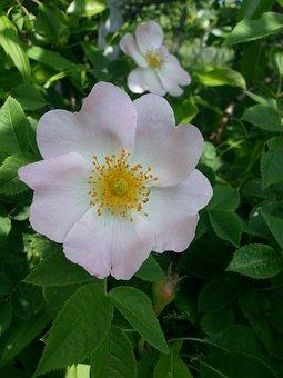 Dacha, Flowers, Nature, Summer Flowers, Summer, Village