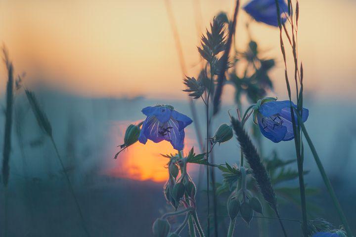 Meadow, Grasses, Sunset, Nature, Blade Of Grass, Grass