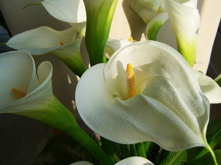 Flower Bouquet, White Calla Lily, Cut Flower