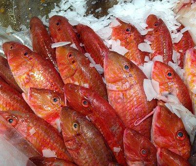 Fish, Mullet, Fish Market
