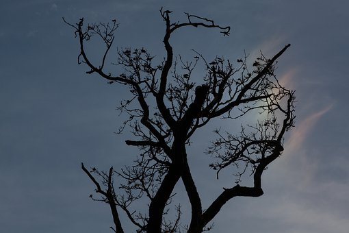 Tree, Branches, Aesthetic, Back Light, Contrast, Branch