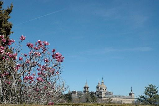 Monastery, El Escorial, Flower, San Lorenzo