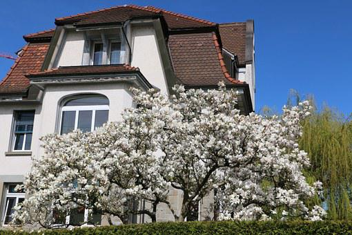 Home, Tree, Magnolia Flowers, Flowers