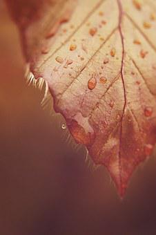 Leaf, Drip, Drop Of Water, Macro, Rain, Mood, Raindrop