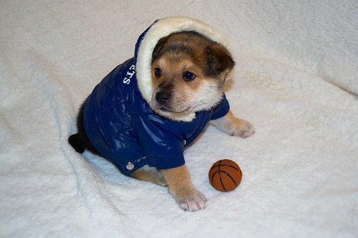 Dog, Clothing, Puppy