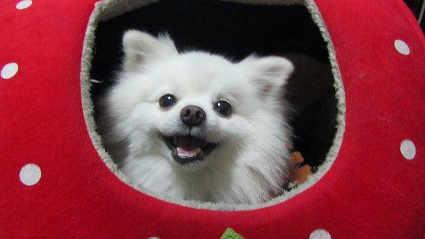 Dog, Cute Dog, Dog Clothes