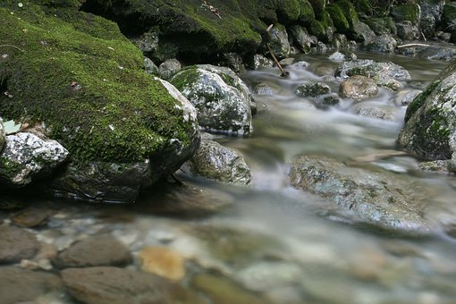 Bach, Water, Nature, Forest, Moss, Gorge, Landscape
