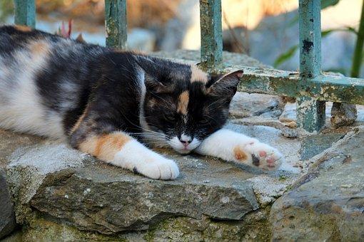 Cat, Sleep, Pet, Animal, Mieze, Tiger Cat, Rest