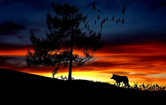 Wolf, Animal, Sunset, Landscape, Nature, Afterglow, Sky