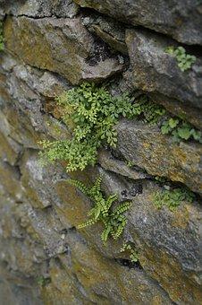 Stone, Rock, Wall, Masonry, Fern, Plant, Settle, Karg