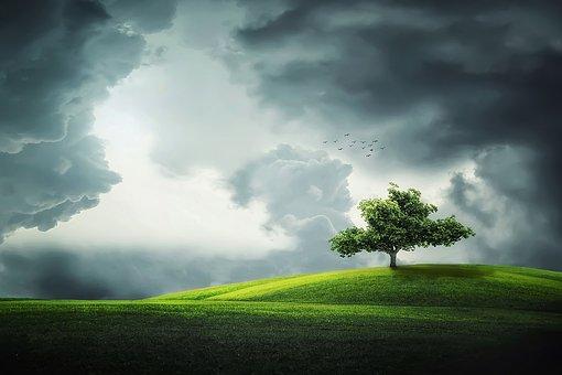 Tree, Birds, Lands, Landscape, Flower, Season, Plant