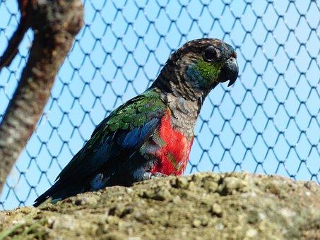 Rotbauchsittich, Parakeet, Bird, Cage, Conure, Pyrrhura