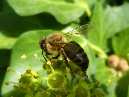 Bee, Libar, Green, Insects, Nature, Nectar, Compilation