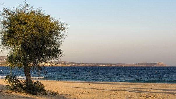 Beach, Empty, Autumn, End Of Season, Sand, Tree, Sea