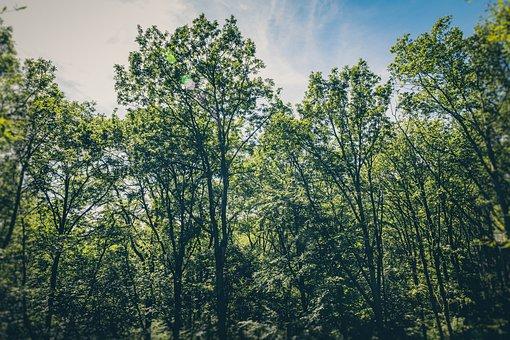 Birds Eye, Branches, Conifer, Deciduous