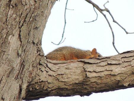 Squirrel, Tree, Heber, Springs, Arkansas, Animal